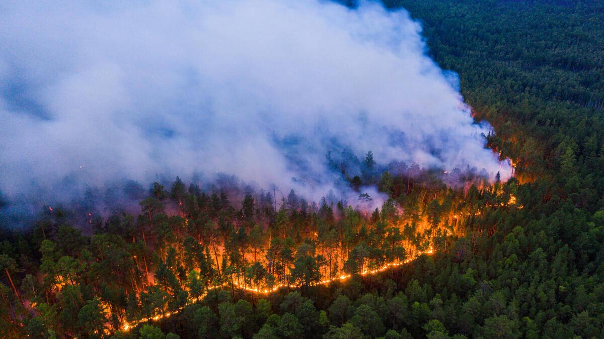 bosbranden klimaatcrisis Siberië