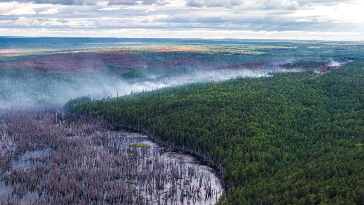 Bosbranden Siberië (regio Krasnojarsk) door klimaatverandering - juli 2020 | Foto: ©Julia Petrenko/Greenpeace