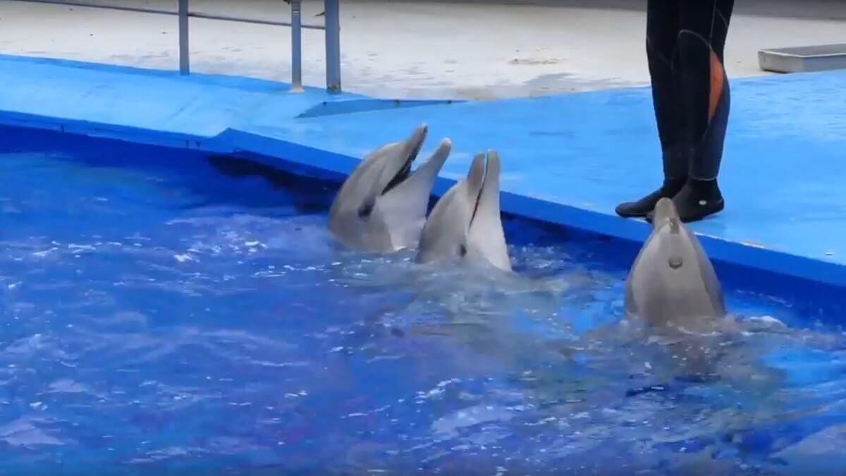 dolfijnen Barcelona Zoo