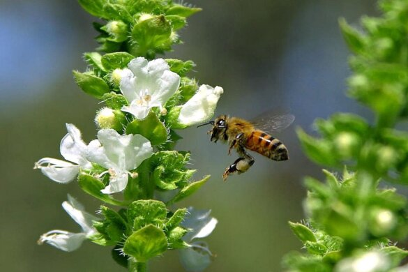 Brussel faalt in bescherming van bijen