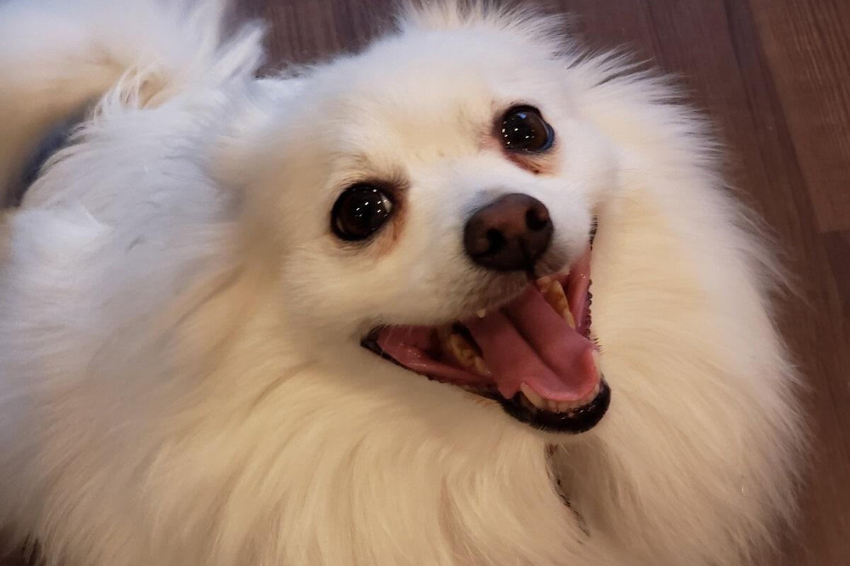 hondje doodgeslagen om plas in huis