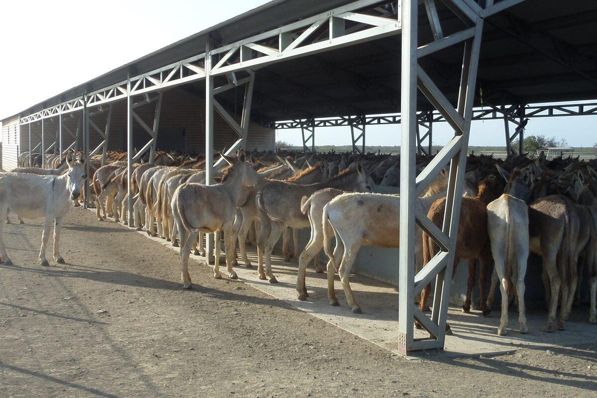 Help jij de ezels op Bonaire?