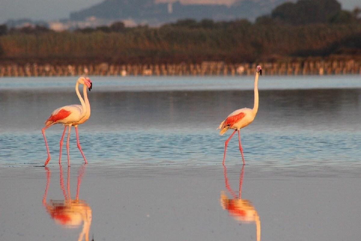 flamingo's in het wild