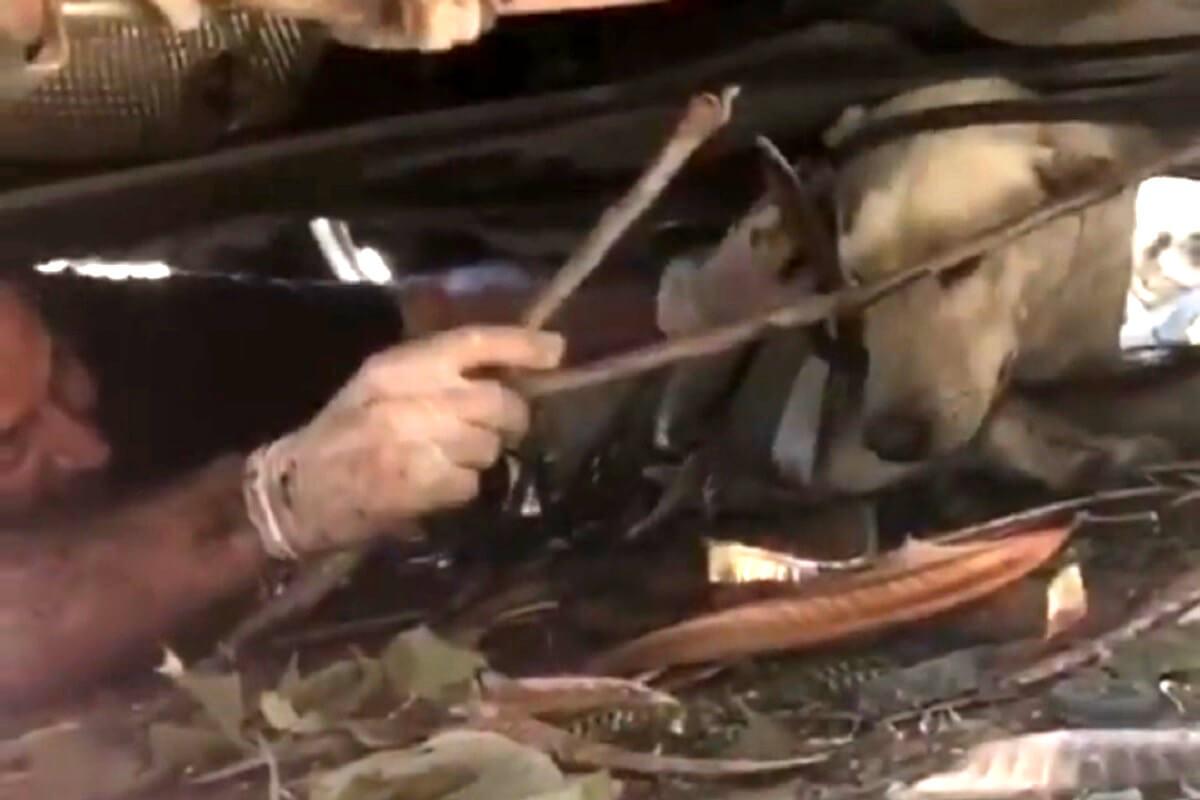 explosie Beiroet
