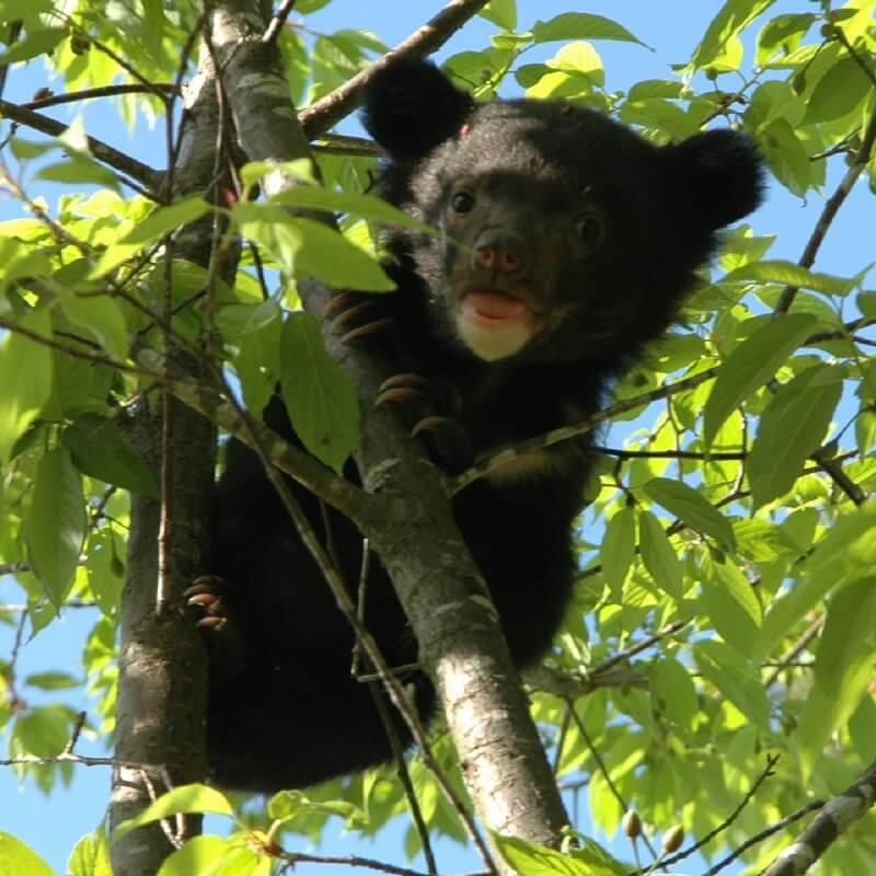 berenwelpen gered