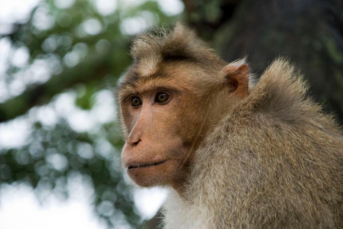 ondernemende aap