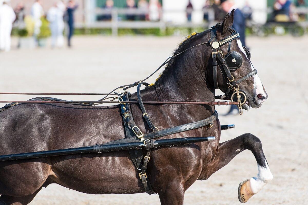 aangespannen paardensport