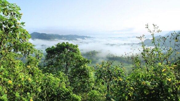 wildernis Amazonegebied