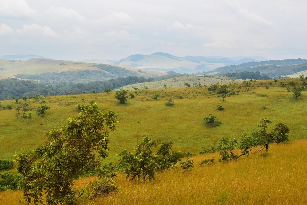 Lopé National Park Gabon