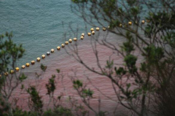 afslachting dolfijnen Taiji