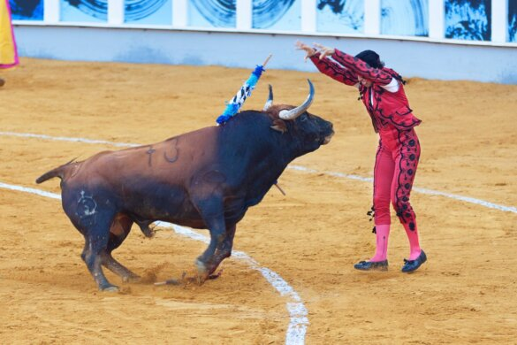 Europarlementariërs stierenvechten niet op lijst immaterieel cultureel erfgoed