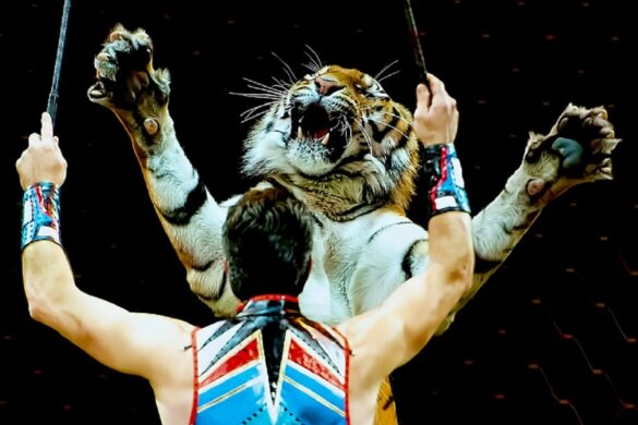 Frans verbod circusdieren, dolfinaria en nertsenfokkerijen