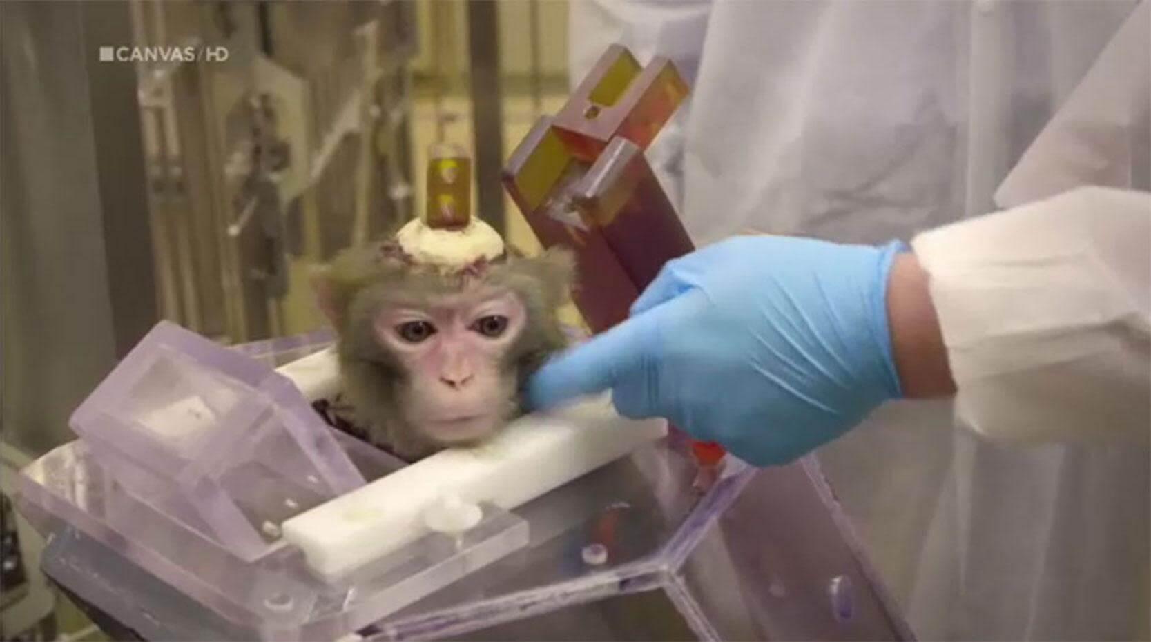 apen dorstig