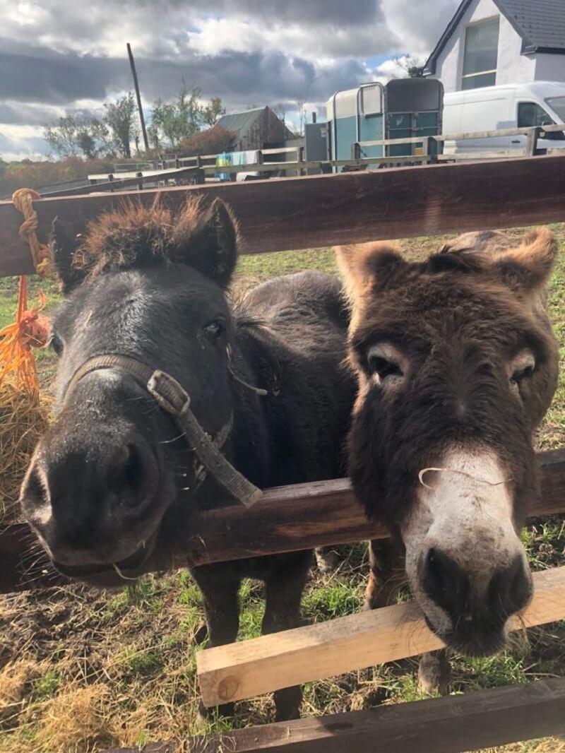 Eli en Holly bij Hilltop Sanctuary