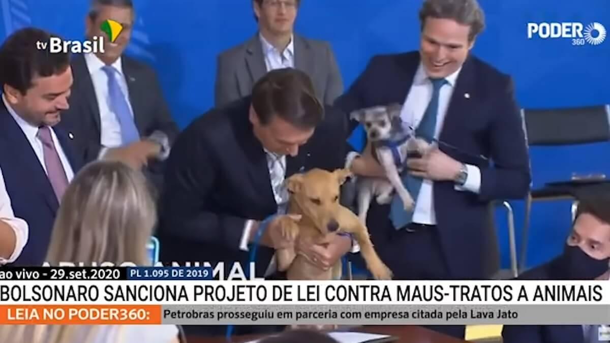 hond ondertekent Braziliaanse dierenwet