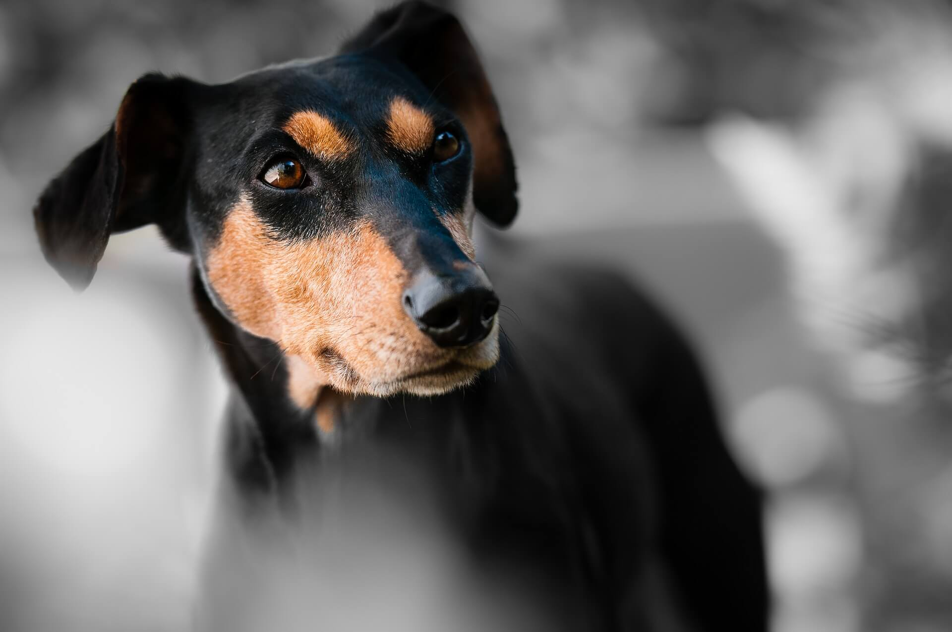 Onthoofde honden