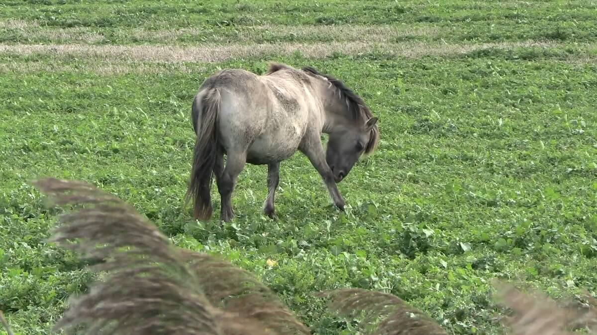 bezwaarschrift tegen slacht 150 konikpaarden OVP