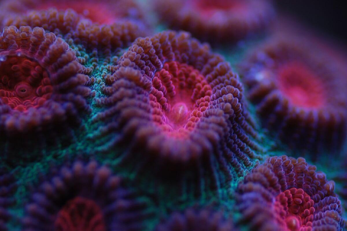 minder dan helft over van Great Barrier Reef