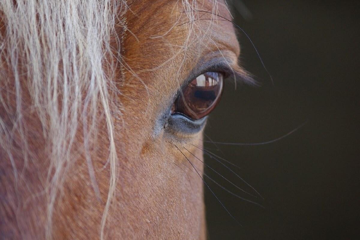 Paardenbeul slaat toe in Hooge Mierde