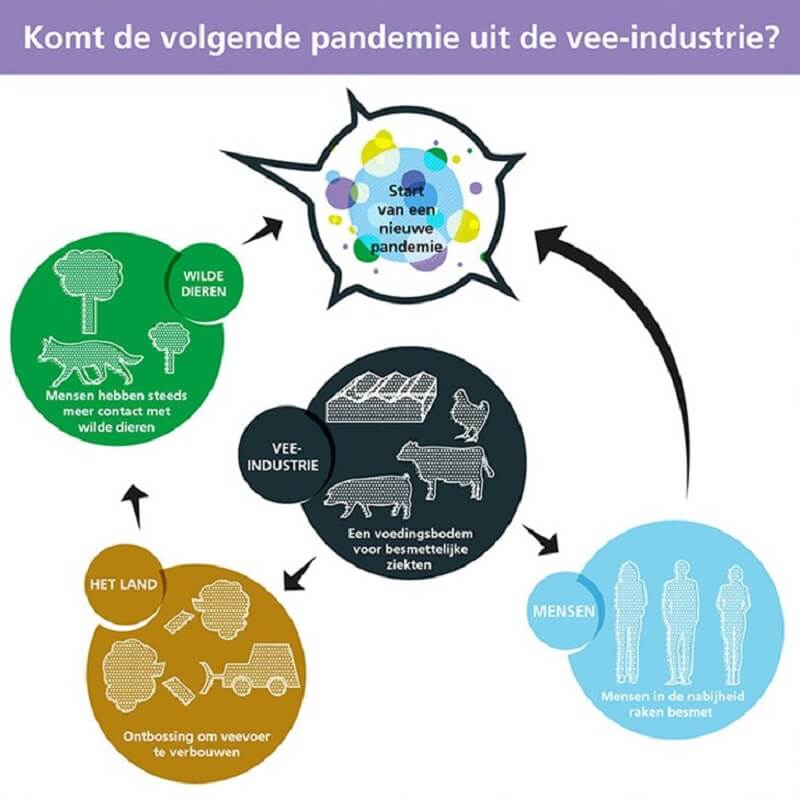 gezondheidsgevaar vee-industrie