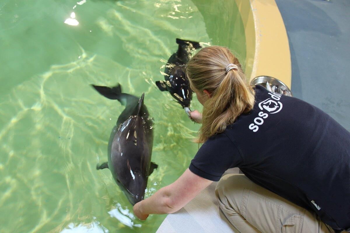 SOS Dolfijn naar Landgoed Hoenderdaell