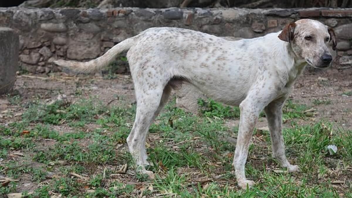 nieuwe dierenwet in Brazilië