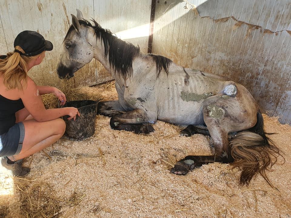 verwaarloosde paarden