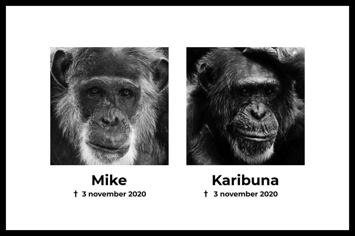 Mike en Karibuna