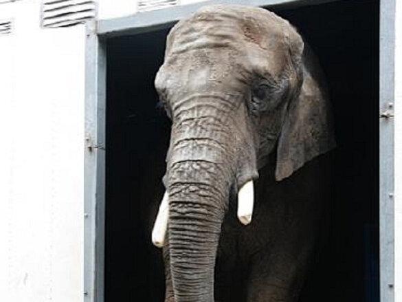Meerderheid Tweede Kamer gunt olifant Buba geen rust