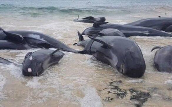 gestrande walvissen Sri Lanka