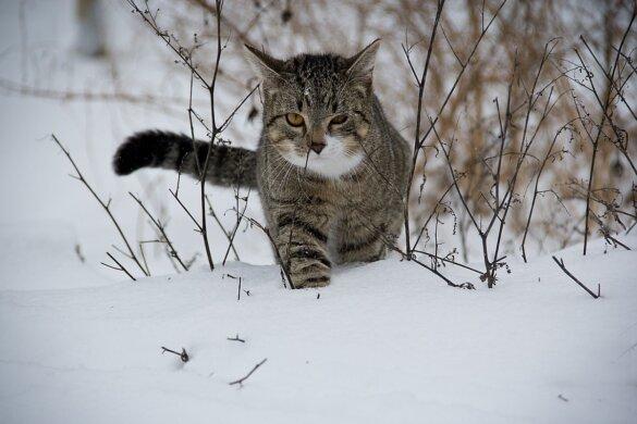 einde jacht op zwerfkatten provincie Utrecht