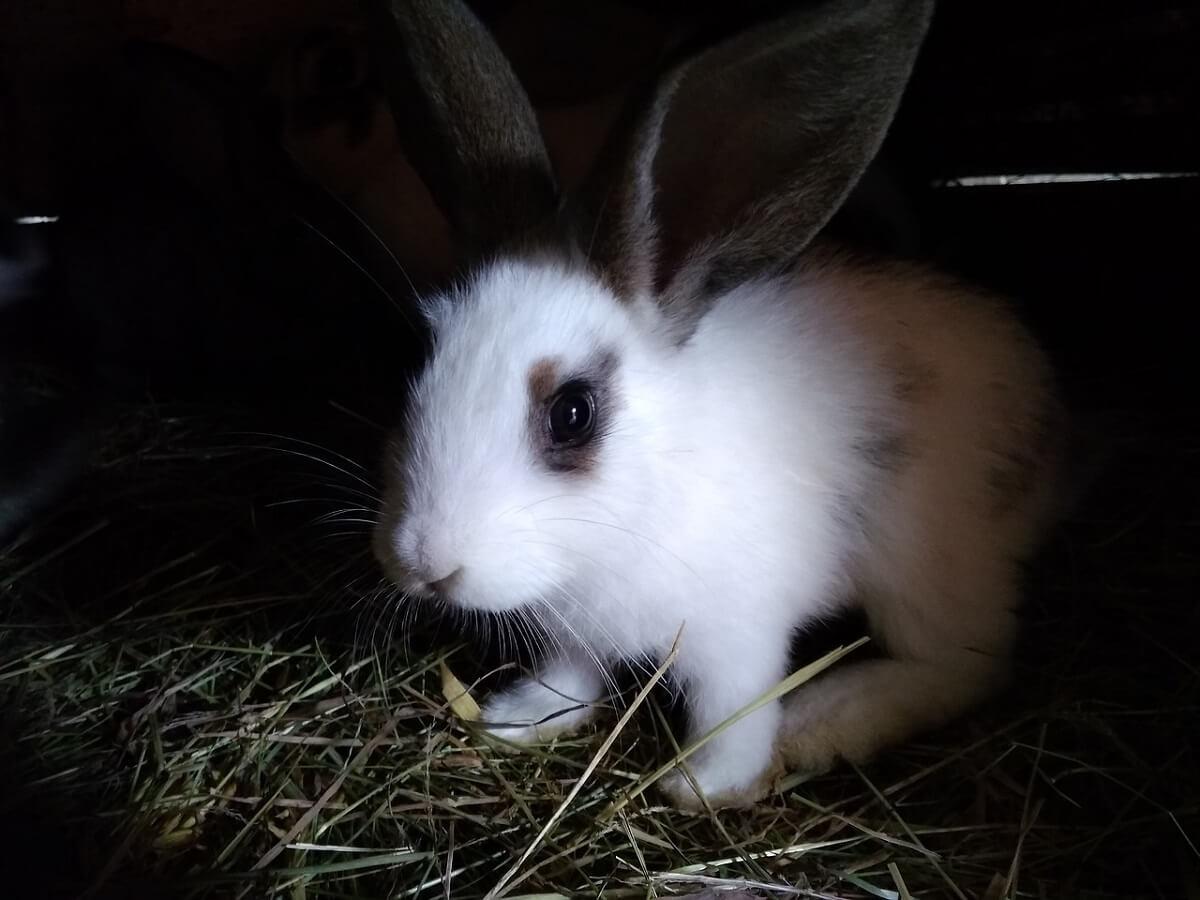 konijnen-lockdown