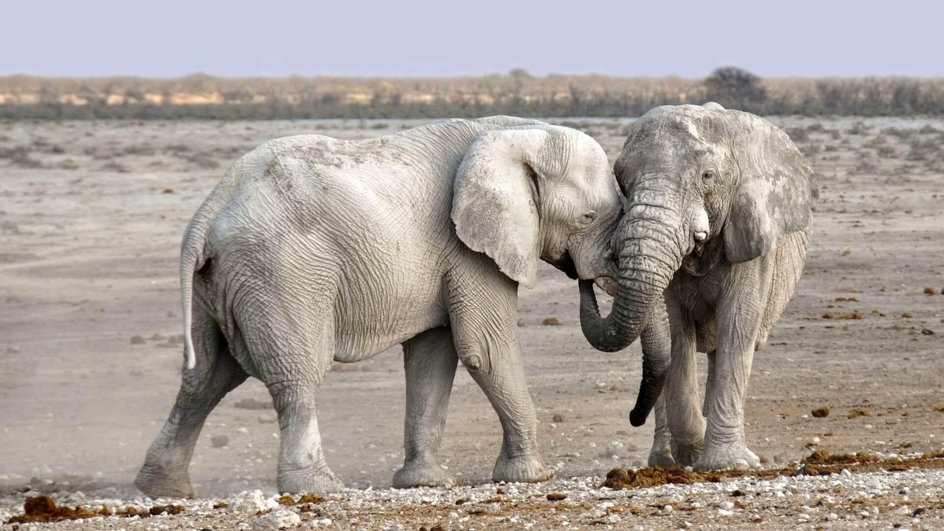 Verrassende familie van de olifant