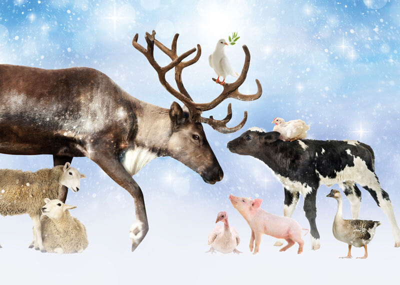 Vredesdienst voor dieren