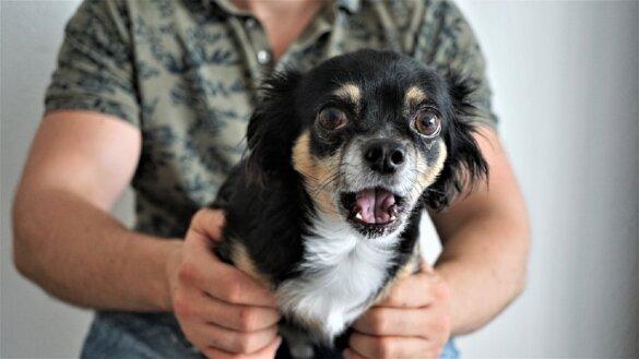 Maximaal 10 jaar houdverbod na dierenmishandeling