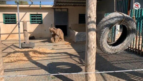 Marghazar Zoo sluit voorgoed na redding beren Suzie en Bubloo