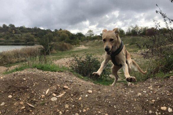 adoptiehond Aleco