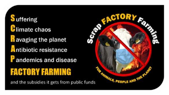 Rechtszaak tegen Britse overheid eist einde intensieve veehouderij