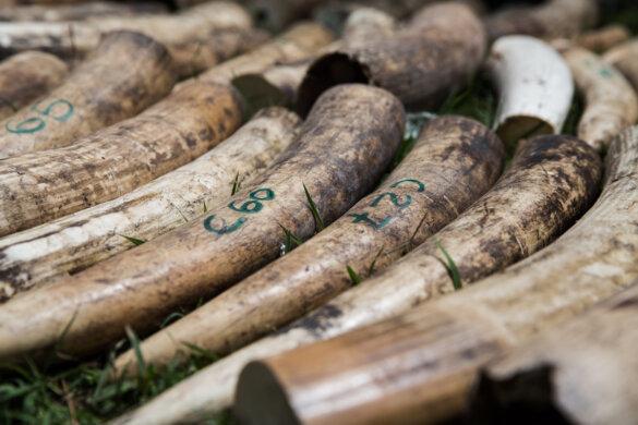 ivoorhandel valt