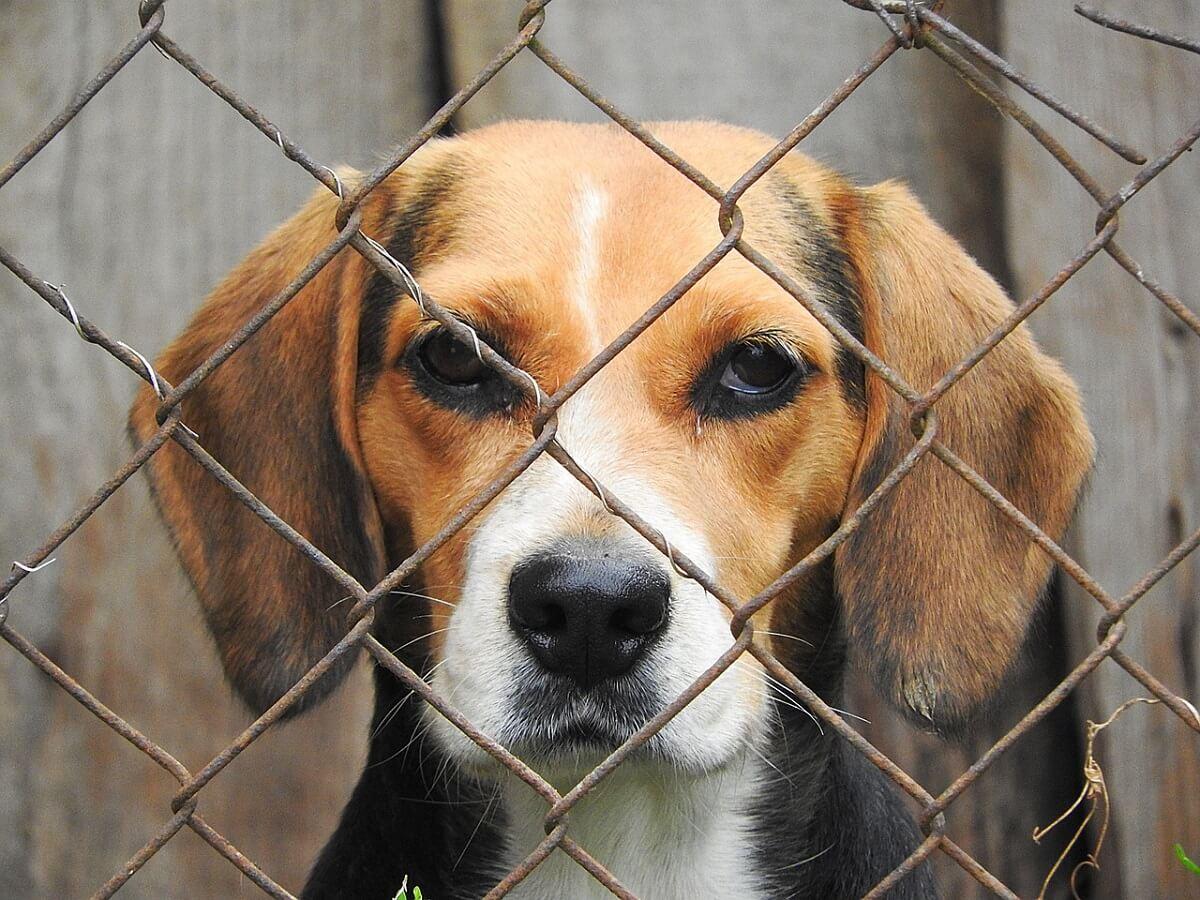 Forse toename dierproeven bij Janssen Pharma in Beerse