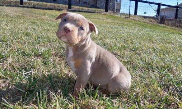 Verboden verloting puppy bij politie gemeld