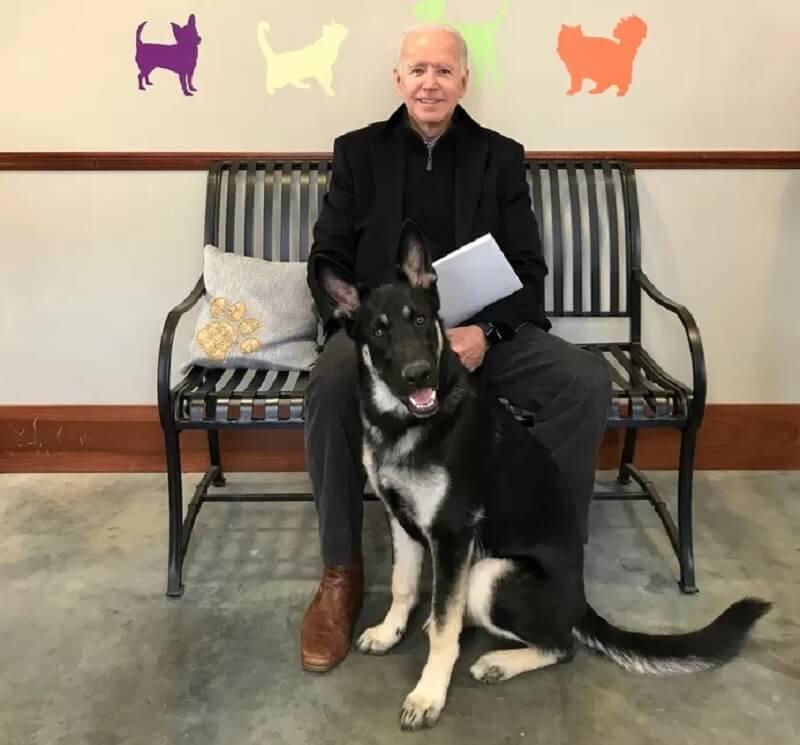 presidentiële hond Major Biden krijgt inDOGuration