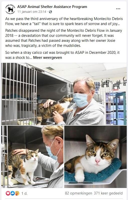 Doodgewaande kat Patches keert na drie jaar terug