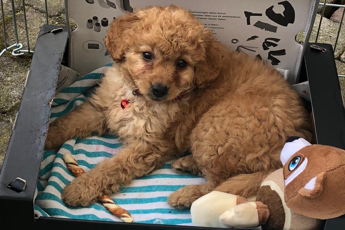Hondje gekocht bij hondenhandelaar De Meiboom in Diessen