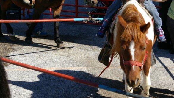 Einde ponycarrousels België in zicht