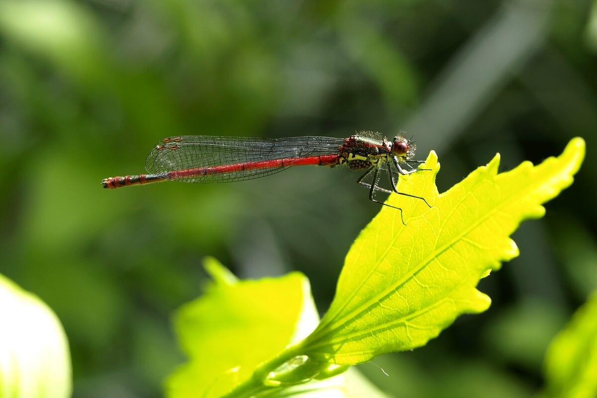 insectenpopulatie krimpt wereldwijd in rap tempo