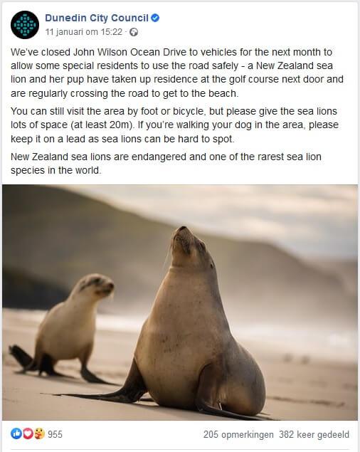 Zeeleeuw en pup beschermd dankzij wegafsluiting