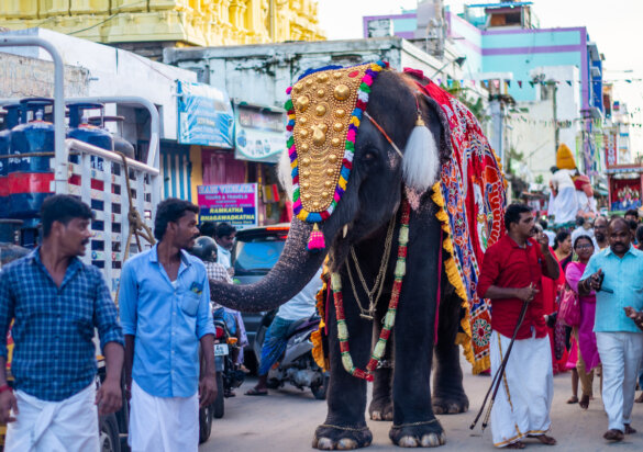 crisis voor olifanten