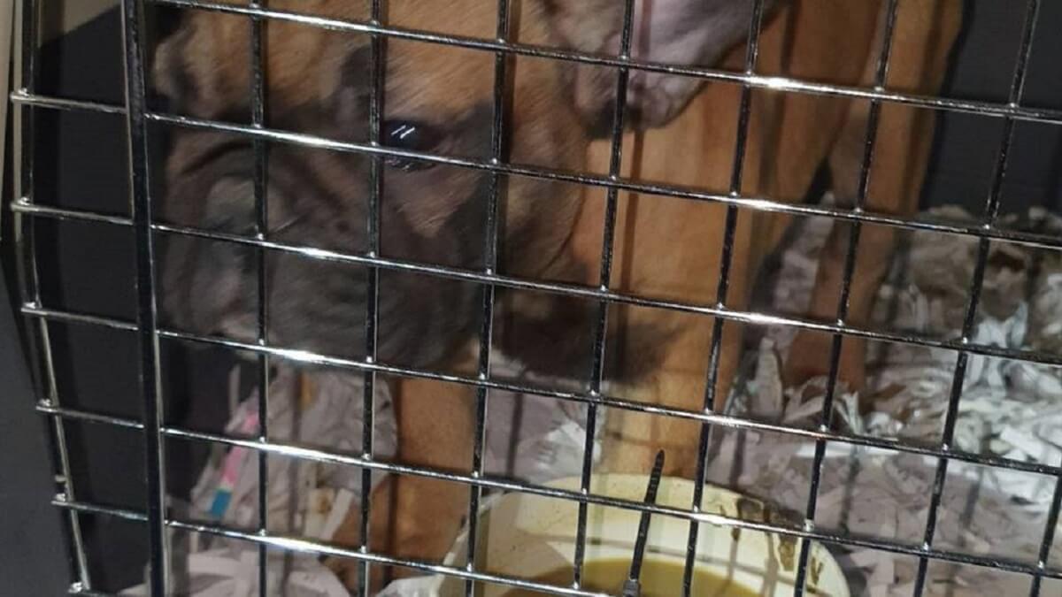 Duitse politie redt 34 hondjes van illegaal diertransport