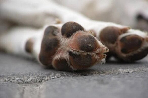 Honden uitgemergeld en ondervoed